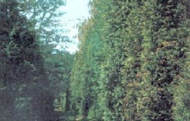 Gödöllői Arborétum