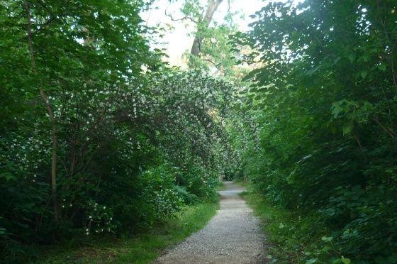 Debreceni Nagyerdő Természetvédelmi Terület, Debrecen