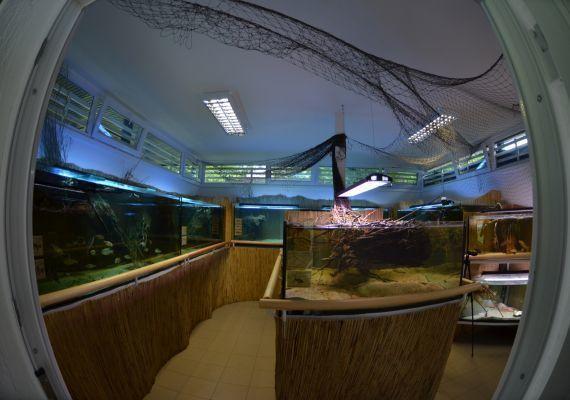 H2O Akváriumház, Agárd