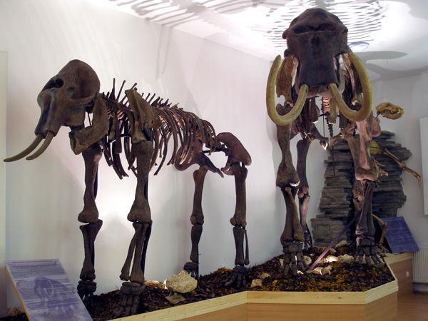Bakonyi Természettudományi Múzeum, Zirc