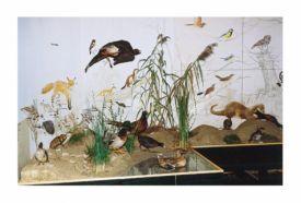 Körös-völgyi Természetvédelmi Bemutatóház