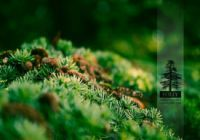 Folly Arborétum és Borászat