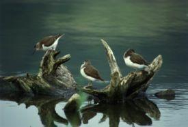 Pacsmagi Halastavak Természetvédelmi Terület