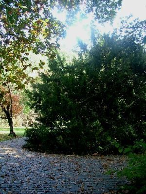 Tiszakürti Arborétum, Tiszakürt