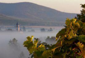 Tokaj-hegyaljai borvidék