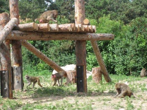 Veszprémi Állatkert, Veszprém