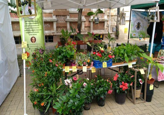 Kertészeti fesztivál, Erdőkertes