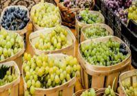 XV. Bor- és Csemegeszőlő fesztivál